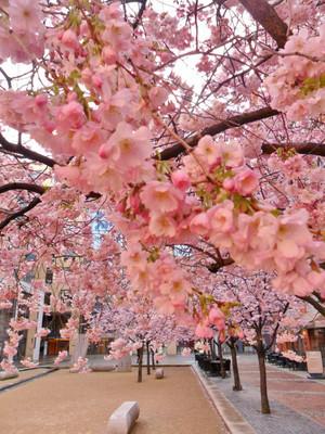 beautiful spring for my sweetie Ellen🌺🌹💐💖