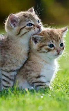 cute,adorable anak kucing