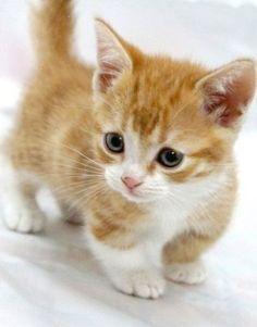 cute,adorable 고양이