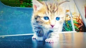 cute,adorable chatons