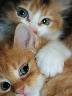 cute,adorable kittens