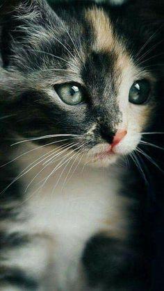 cute,adorable 子猫