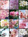 spring vibes🌺🌹💐 - random photo