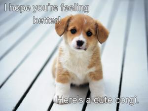 Hope You're Feeling Better Cute Corgi