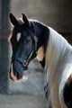Beautiful Horse 💖