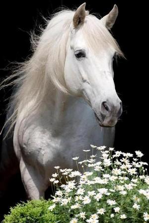 Pretty Horse 💖