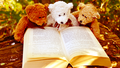 Teddy Bear Wallpaper - beautiful-pictures wallpaper