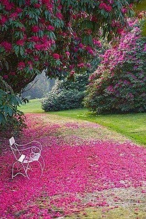 beautiful spring🌹💖