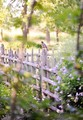 beautiful spring🌹💖 - spring photo