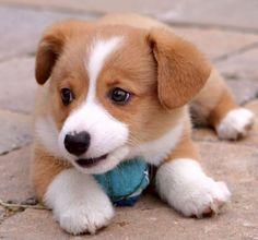 cute Anak Anjing
