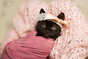 Kitty Fashionista