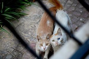 سٹریٹ, گلی CATS OF EGYPT