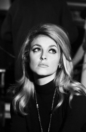 Sharon Tate Images Icons Wallpapers And Photos On Fanpop