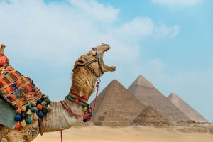 tumblr 骆驼 SAY WELCOME TO EGYPT