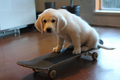 skateboarding puppies - cute-puppies photo