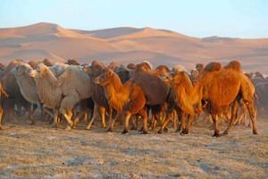 Alxa League, Mongolia