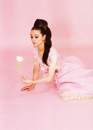 Beautiful Things 壁纸 entitled Audrey Hepburn👗💖🌸