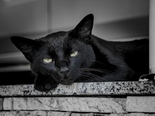 Beautiful Things 壁纸 called Beautiful Black Cat