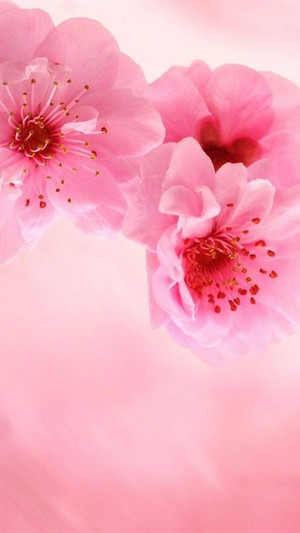 Beautiful Flowers 🌸