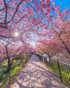 Beautiful Spring 🌸