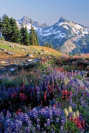 Beautiful Things/Yellowstone Park