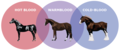 Blood Types - horses photo