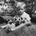 Boy And His gatitos