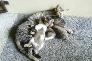 Cat And Her gatinhos
