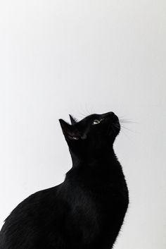 Cute Cat 😺