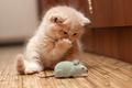 Cute Little Kitten - yorkshire_rose photo
