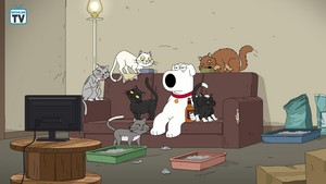 "Family Guy ~ 17x01 ""Married With Cancer"""