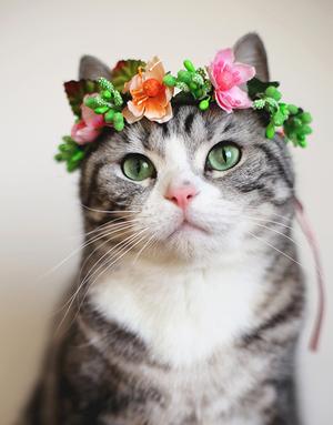 blume Kitty