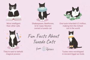 Fun Facts About Tuxedo মার্জার