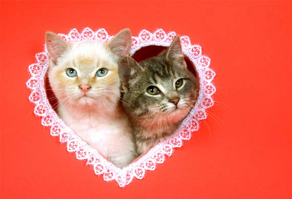 Happy Valentine`s day for ma lovely sweet Heather babe🌹💖💍🌸
