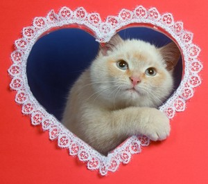 Happy Valentine`s দিন to my so sweet তারকা channie!🌹💖💍🌸