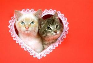Happy Valentine`s দিন to my sweet তারকা channie!🌹💖💍🌸