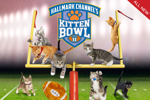 Kitten Bowl Ii