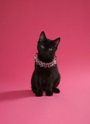 Kitten Wearing ہار