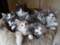 Kittens - cats photo