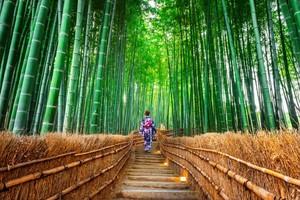 Kyoto, জাপান