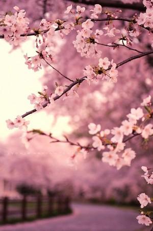Spring feelings🌸🌹🌷
