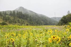 Taebaek, Korea