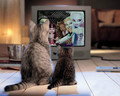 Two Cats watching Monster High: Friday Night Frights - monster-high photo