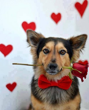 Valentine sprinkles for ma so sweet jess🌺🌹💖