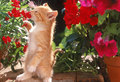 Wake Up And Smell The Roses - kittens photo