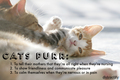 Why Cats Purr - kittens photo