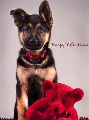 beautiful Dog puppy🌹💖