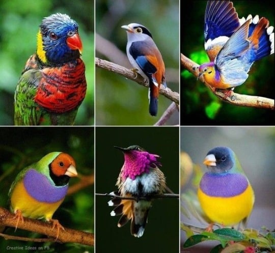 beautiful birds🐦