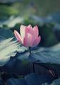 beautiful flowers🌹💖🌸 - flowers photo