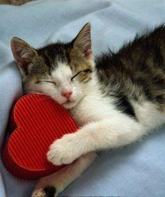 meowy valentine's 日
